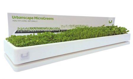 Set za vzgojo mikro zelenjave.