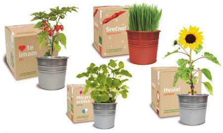 Darilni set za vzgojo rastlin (4 različne)