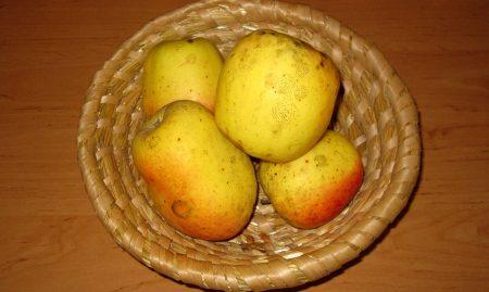 EKO SADIKE Jablana sorta Zvončasto jabolko cepljena na jabla …