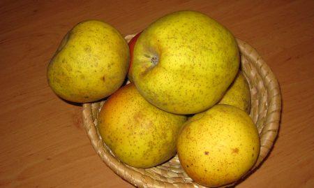EKO SADIKE Jablana sorta Kanada cepljena na jablanov sejanec