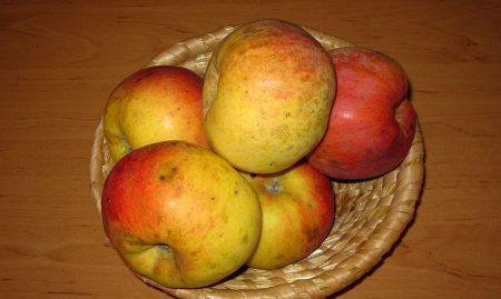 EKO SADIKE Jablana sorta Ontario cepljena na jablanov sejanec