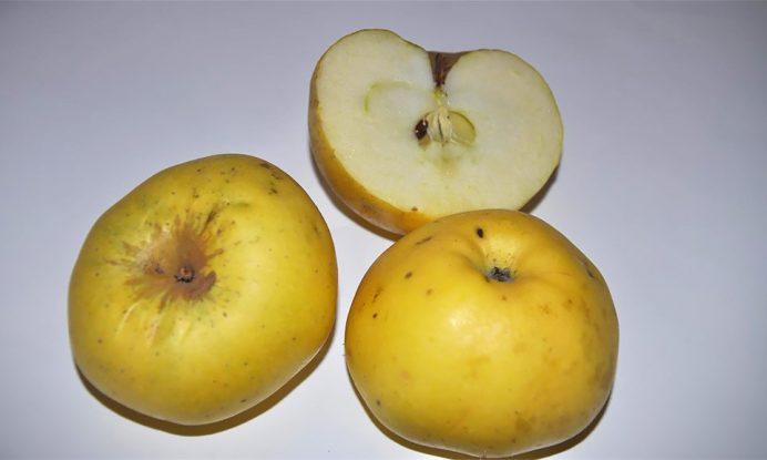 Jablana sorta Dolenjska voščenka