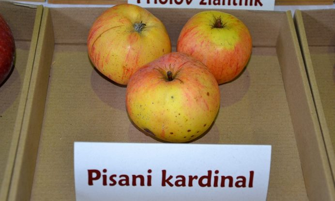 jablana sorta Pisani kACardinal