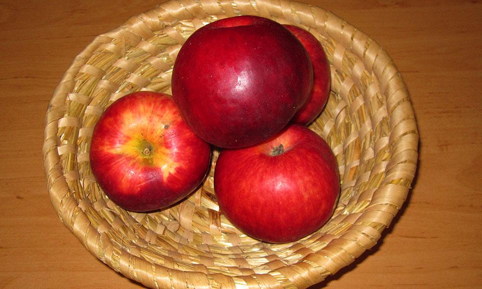 EKO SADIKE Jablana sorta Burgundy cepljena na jablanov sejanec
