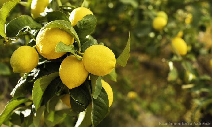 limona sadika