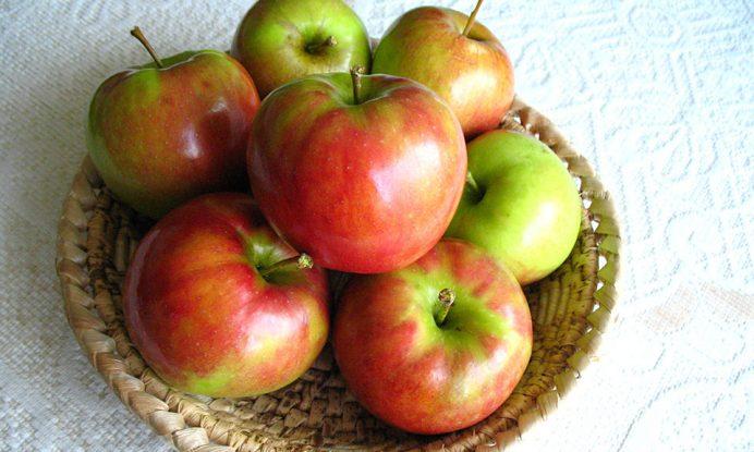 jablana jabolko jonagold