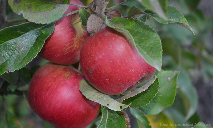 jablana sadika