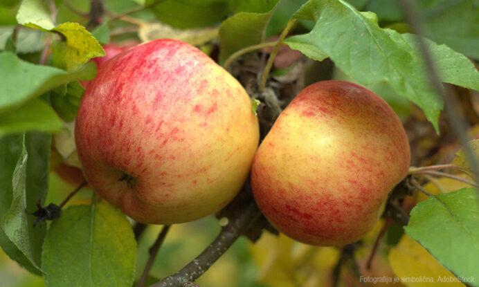 jablana topaz sadika